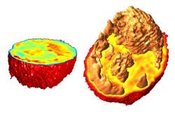 MIT technique reveals inner lives of cells
