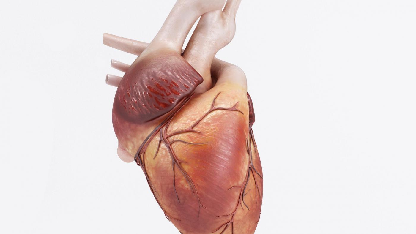 3D Render of a healthy Human Heart