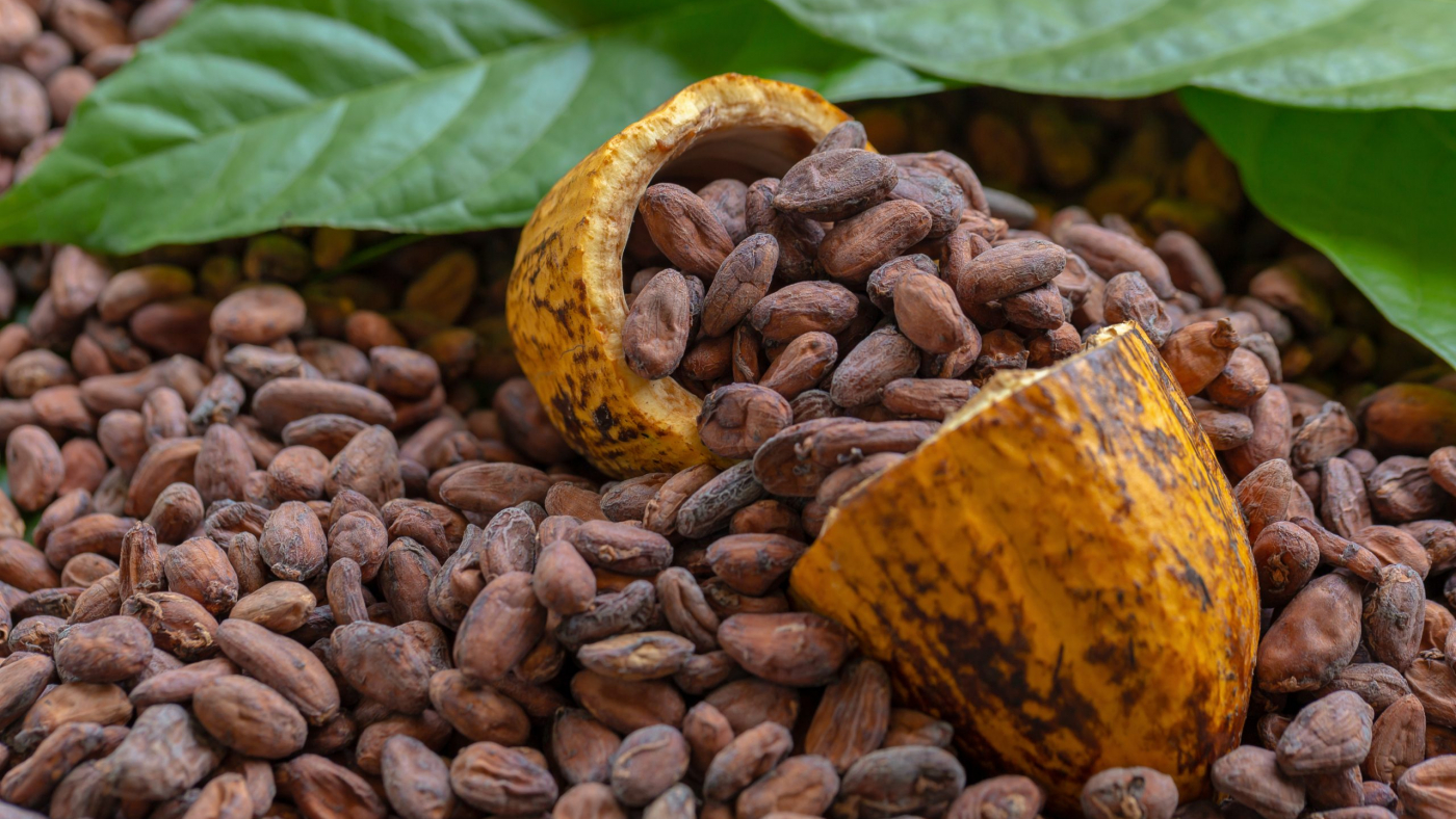Cocoa Beans and Cocoa Fruits on wooden, Cocoa concept.
